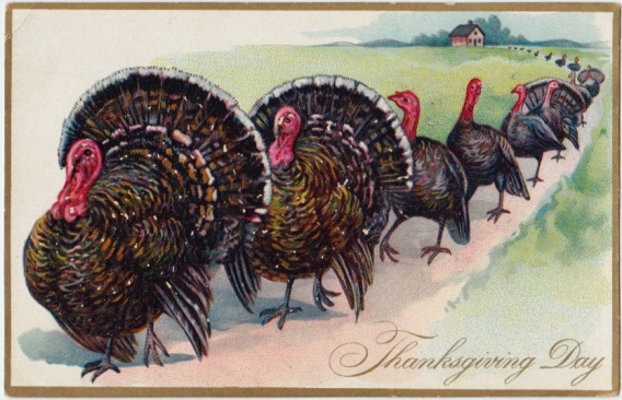 ThanksgivingTurkeys